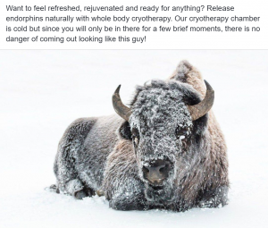 Cryotherapy Social Media - Snow covered buffalo