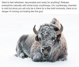 Cryotherapy Social Media - Snow covered buffalo